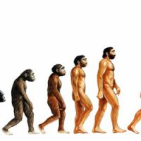 Penis Size and Evolution – Your Penis is Larger Than You Think