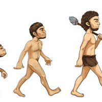 Is the Penis Getting Smaller Through Evolution?